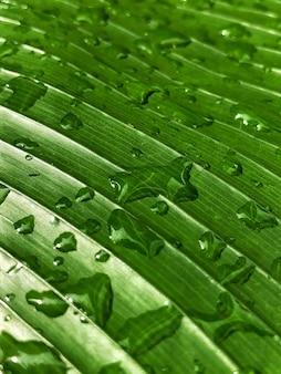 Colpo del primo piano di un congedo verde con gocce d'acqua dopo la pioggia