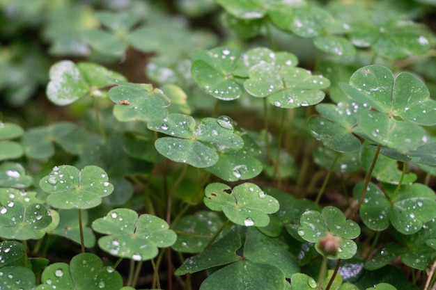 Closeup shot of green leaves covered with dewdrops