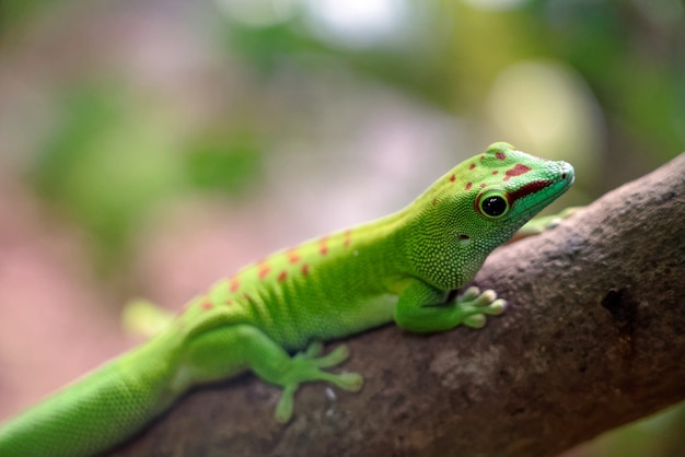 Closeup shot of a green lizard on a tree in a forest