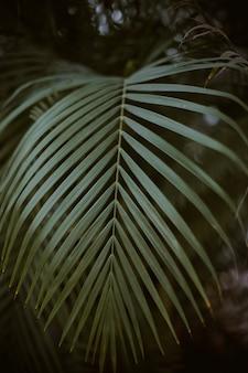 Colpo del primo piano della foglia di palma verde con il buio