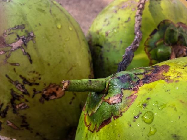 Colpo del primo piano dei frutti verdi della papaia con le gocce di acqua su loro