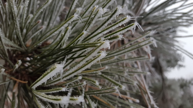 Closeup shot of a green plant covered with white frost