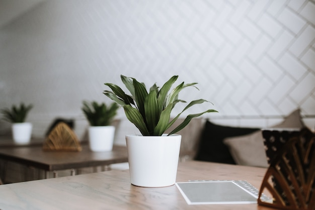 Closeup shot of a green plant in a white ceramic pot on a table in a cafe
