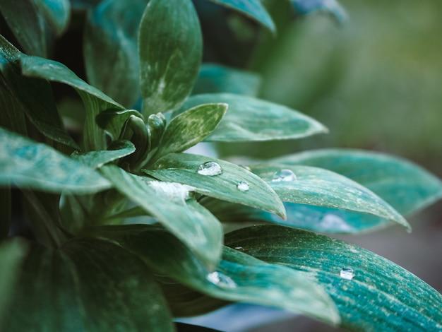 Colpo del primo piano della pianta verde con gocce d'acqua sulle foglie nel parco