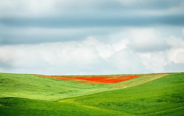 Colpo del primo piano di un campo verde e rosso sotto un cielo nuvoloso durante il giorno