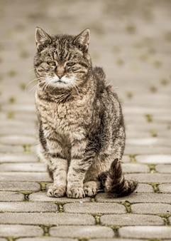 Primo piano di un gatto grigio su una strada piastrellata Foto Gratuite