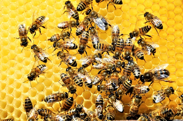 Closeup shot of a group of bees creating a honeybee full of delicious honey
