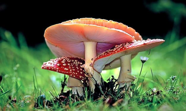 Colpo del primo piano di funghi in crescita nella foresta durante il giorno