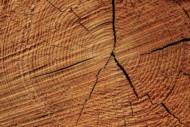 Closeup shot of the growth rings on the cut tree stump