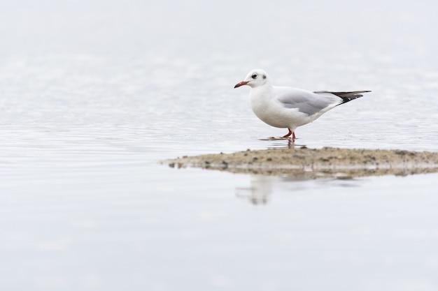 Closeup shot of a gull on a beach