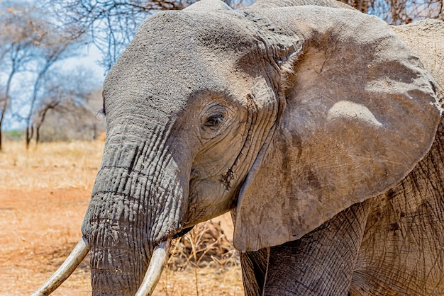 Closeup shot of the head of a cute elephant in the wilderness