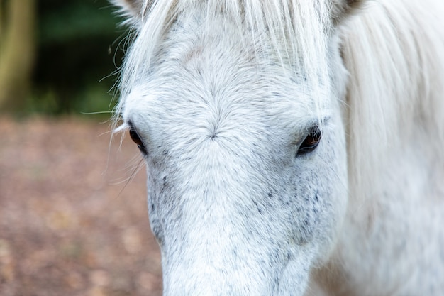 Closeup shot of the  head of a white horse in thornecombe woods, dorchester, dorset, uk