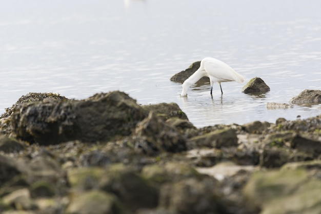 Closeup shot of a heron catching fish in a water