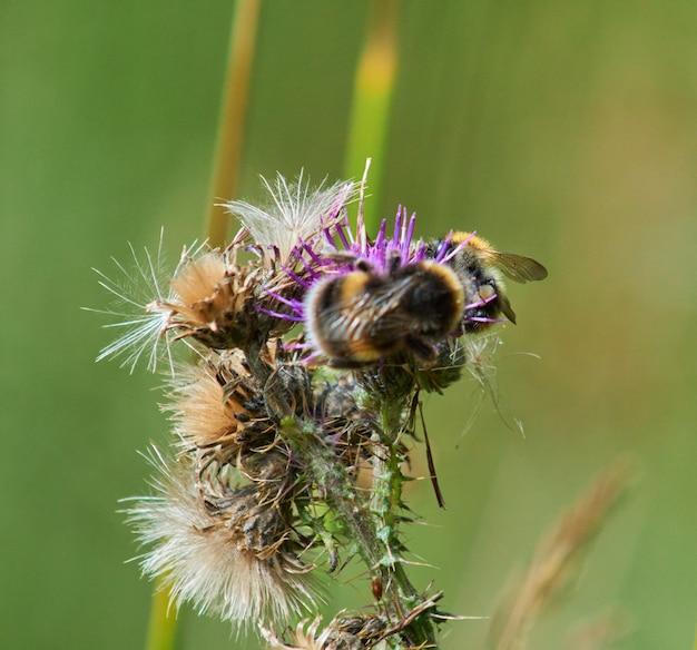 Closeup shot of honeybee on a flower