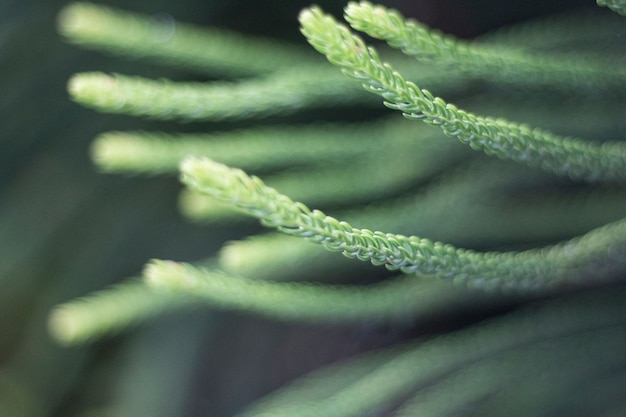 Closeup shot of horsetail plant
