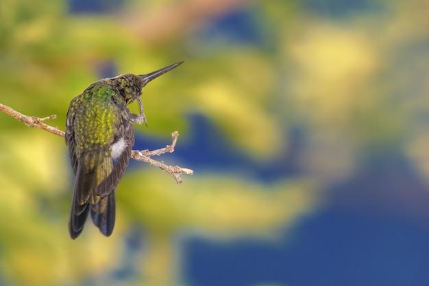 Primo piano di un colibrì appollaiato su un ramo di un albero