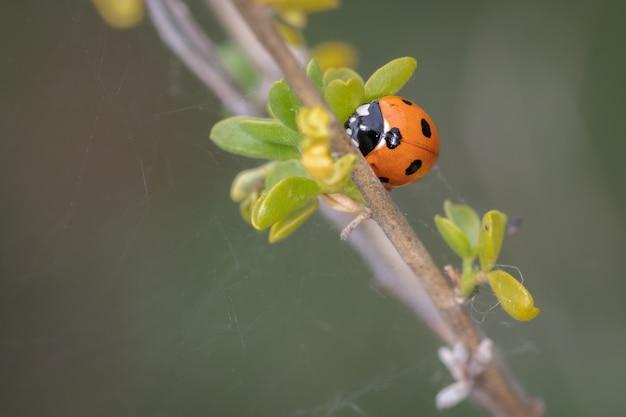 Closeup shot of a ladybug on a plant