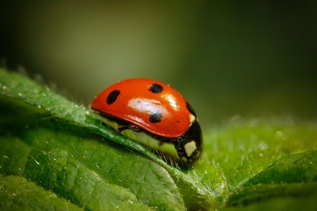 Closeup shot of a ladybug standing on a leaf