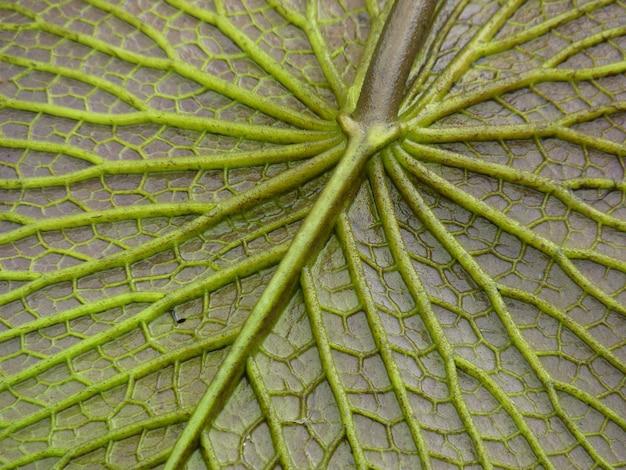 Closeup shot of a leaf texture with vibrant green veins