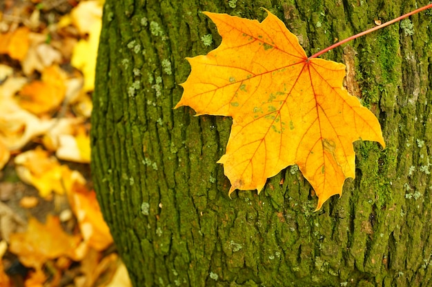 Closeup shot of a leaf on a tree bark during autumn