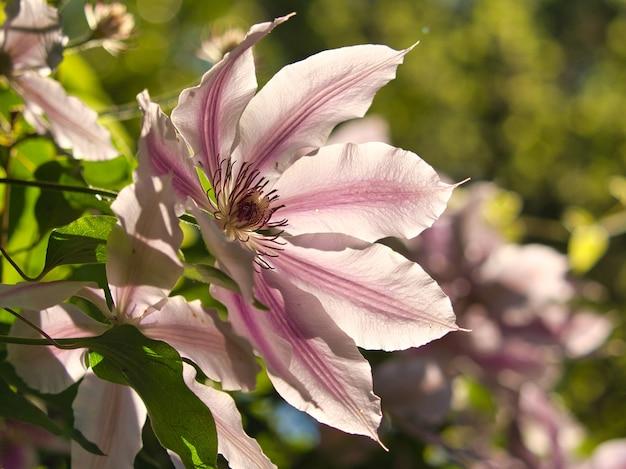 Closeup shot of a lily