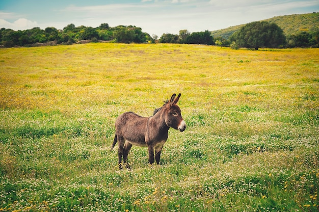 Closeup shot of a little donkey on the yellow flower's field