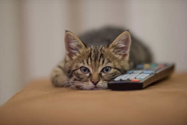 Closeup shot of a little kitten sleeping next to a remote control on sofa