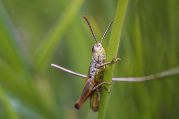 Closeup shot of a locust on a green plant