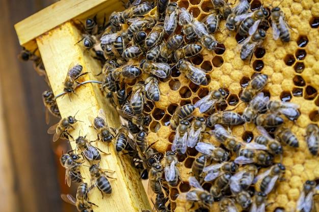 Primo piano di molte api su un telaio a nido d'ape che producono miele
