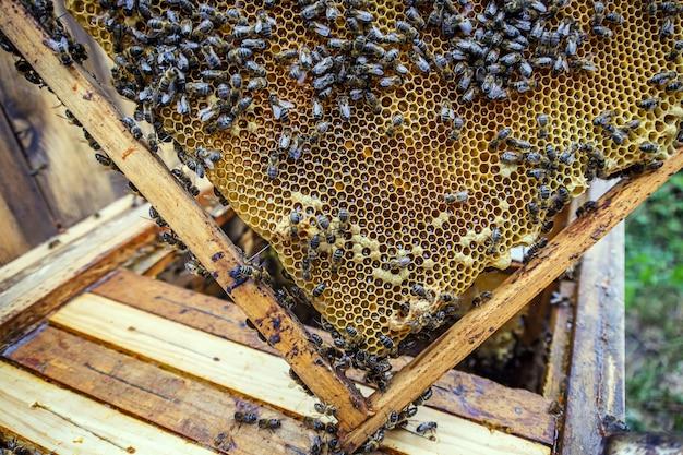 Primo piano di molte api su un telaio a nido d'ape che produce miele