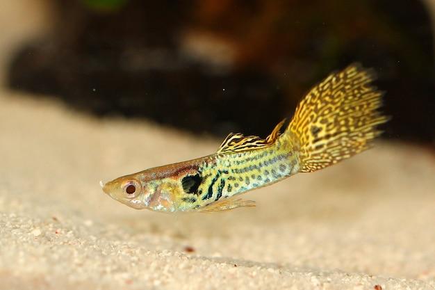 Closeup shot of a million fish above a sandy ground in the aquarium