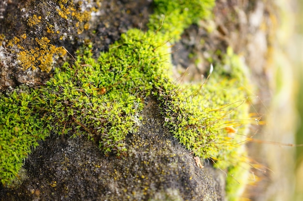 Closeup shot of the moss of the stone surface