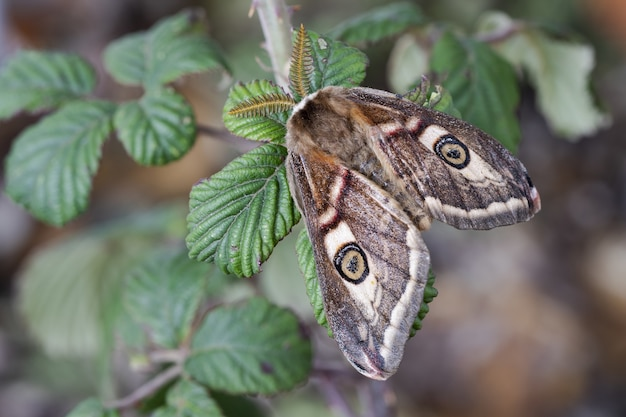 Closeup shot of the moths with beautiful patterns on its wings on the green plant