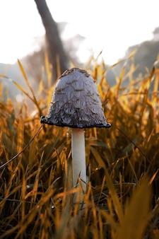 Closeup shot of a mushroom in the field