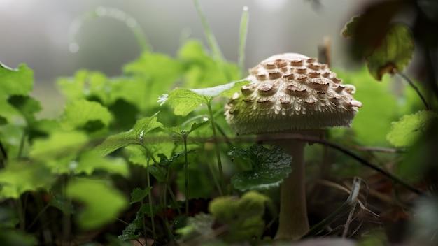 Closeup shot of a mushroom growing between the grass