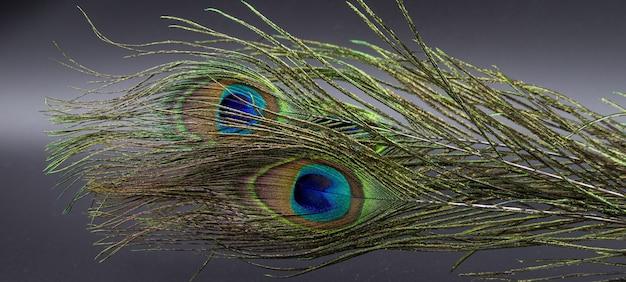 Colpo del primo piano di una piuma di pavone naturale