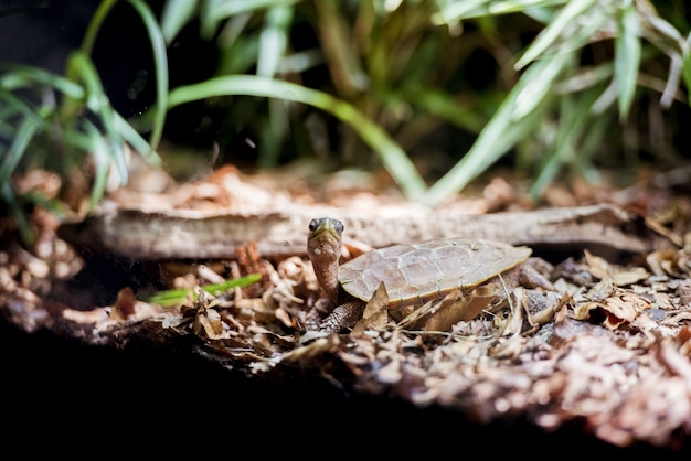 Снимок крупным планом детенышей прудовой черепахи на берегу