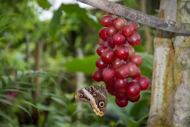 아름 다운 갈색 나비의 근접 촬영 샷