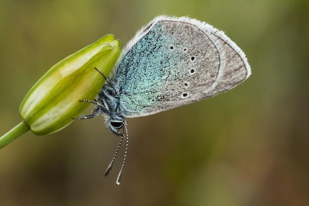 꽃에 아름 다운 나비의 근접 촬영 샷