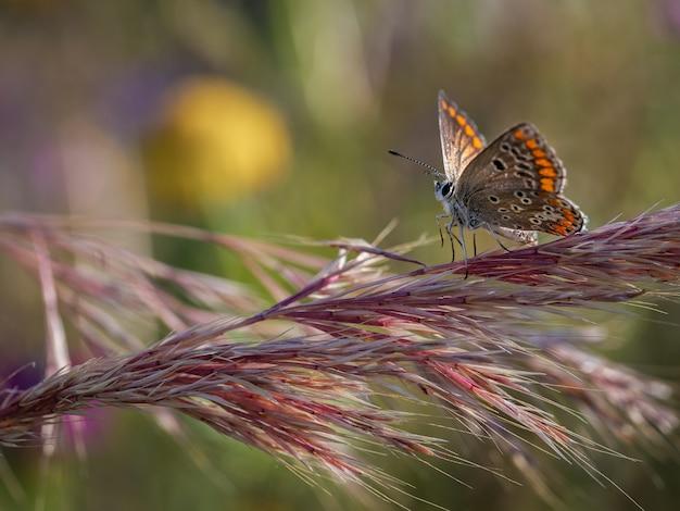 자연 서식지에서 촬영 한 아름다운 나비의 근접 촬영 샷