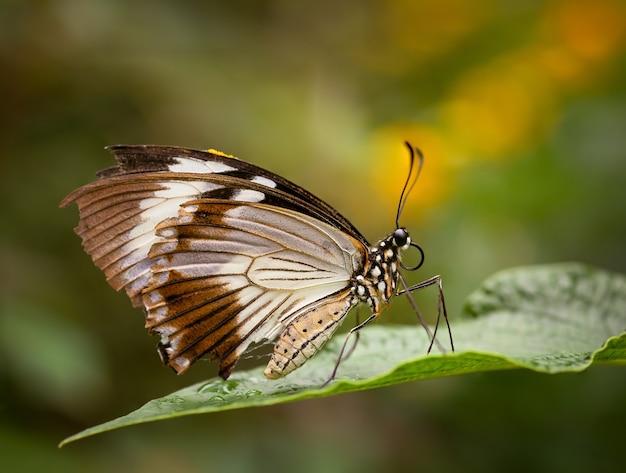 ぼやけた背景の緑の葉の上に座っている美しい蝶のクローズアップショット