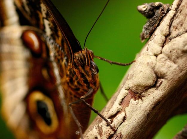 美しい蝶のクローズアップショット