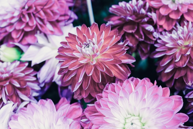 화려한 달리아 꽃과 함께 아름 다운 꽃 조성의 근접 촬영 샷