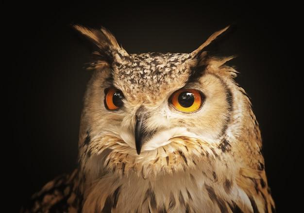 Крупным планом выстрел красивая сова глядя