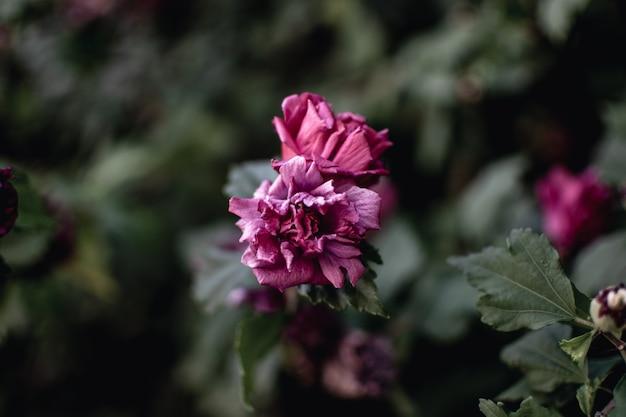 아름 다운 보라색 꽃의 근접 촬영 샷