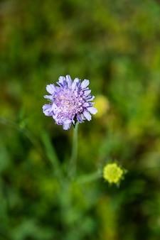 Снимок крупным планом красивый фиолетовый цветок подушечки для иголок