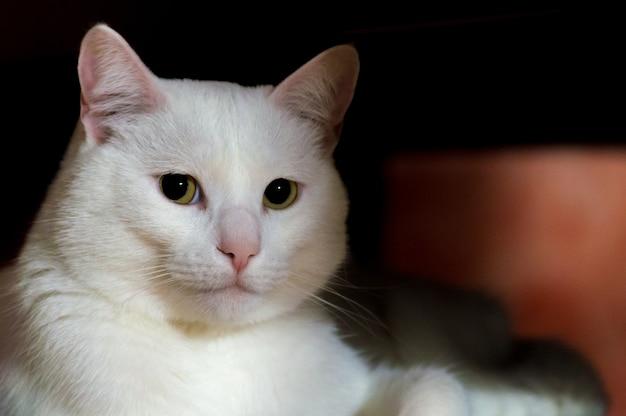 그늘에 앉아 녹색 눈을 가진 아름다운 흰 고양이의 근접 촬영 샷