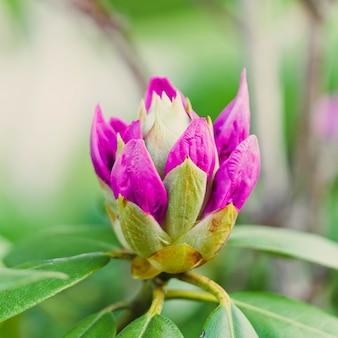 Съемка крупного плана красивого полевого цветка зацветая в поле с некоторой утренней росой вышла на его