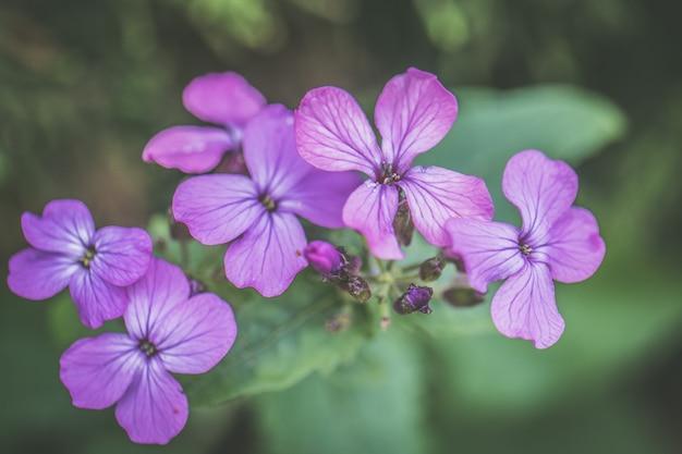 아침 이슬이 필드에 피는 아름다운 야생 꽃의 근접 촬영 샷은 왼쪽