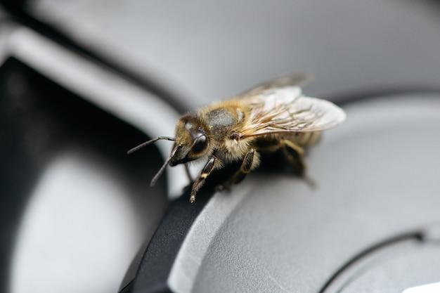 Крупным планом выстрел пчелы на серой поверхности